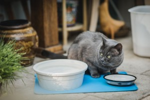 Blue with his food and water dishes