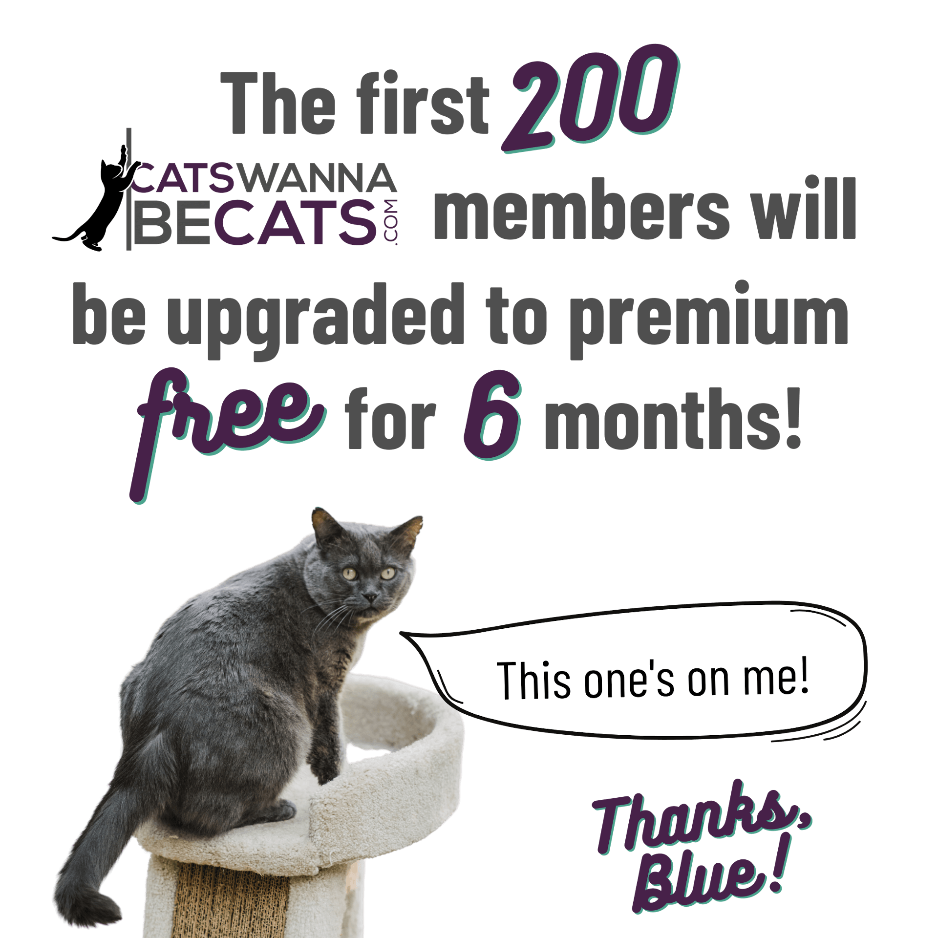 Cats Wanna Be Cats - First 200 Promo