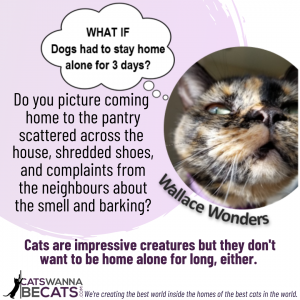 Wallace Wonders: What if Dogs Had to Stay Home Alone for Three Days?