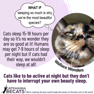 If Your Cat is Keeping You Up at Night (featuring Wallace Wonders)