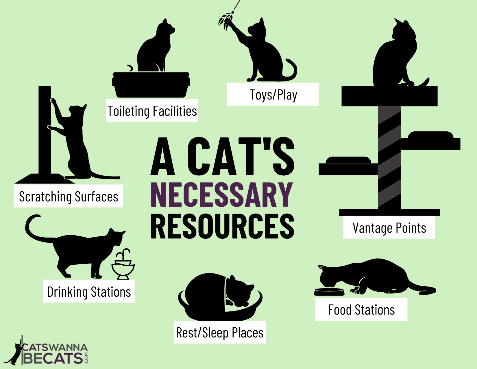 A Cat's Necessary Resources