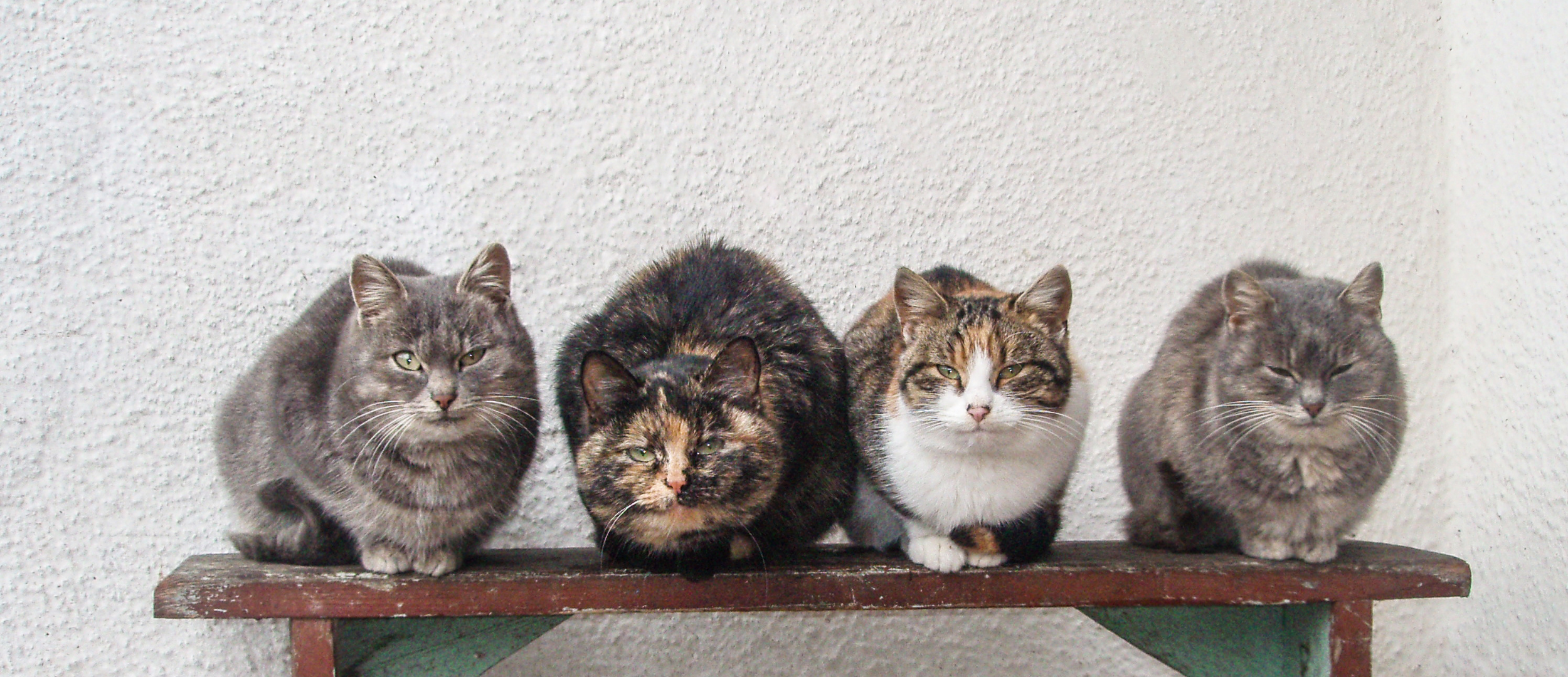 Four cats sitting side by side